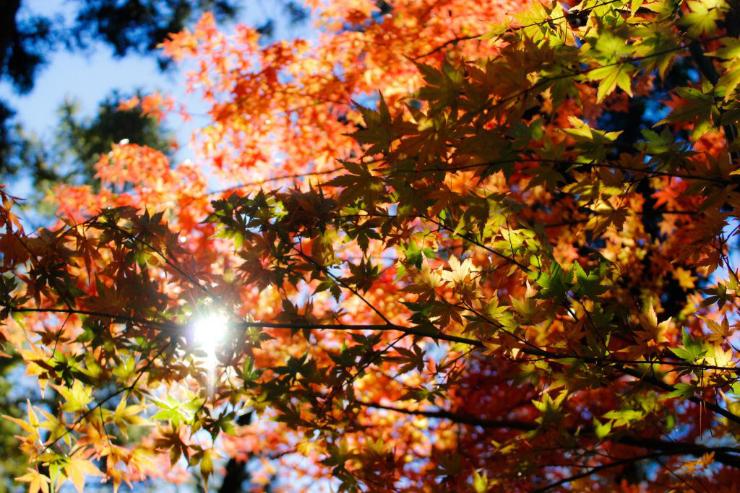 Autumnal Adoration