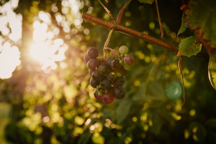 Working in the Vineyard: Joy or Burden?