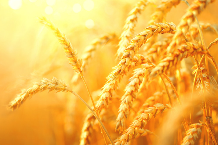 Dealing with the Wheat and the Weeds